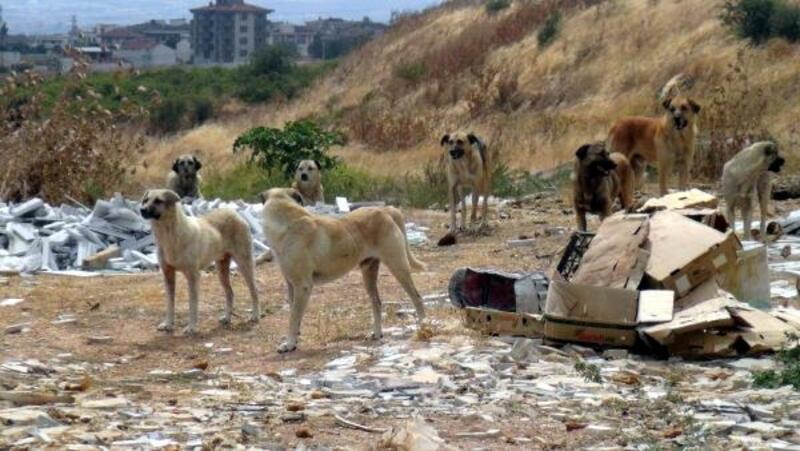 Çöp sahası kapanınca sokak köpekleri aç kaldı