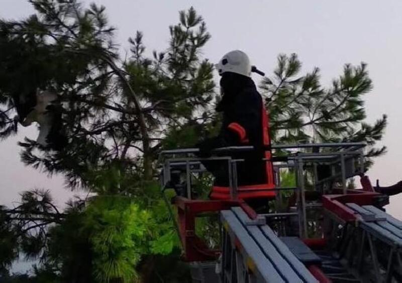 Ağaca takılan leyleği itfaiye kurtardı
