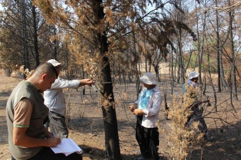 Yılmaz: Yanan alanlar 1 yıl içerisinde ağaçlandırılacak