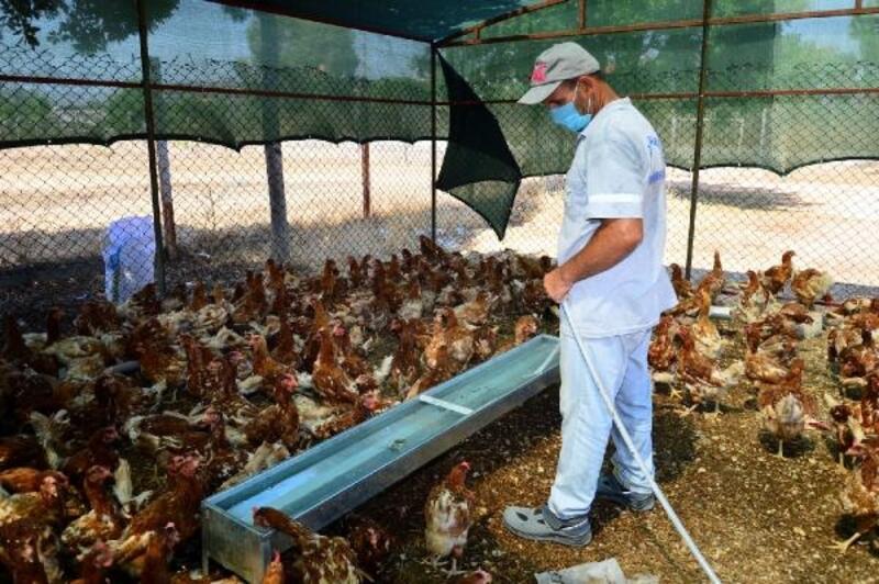 Manavgat Belediyesi'nden bağış hayvan barındırma merkezi