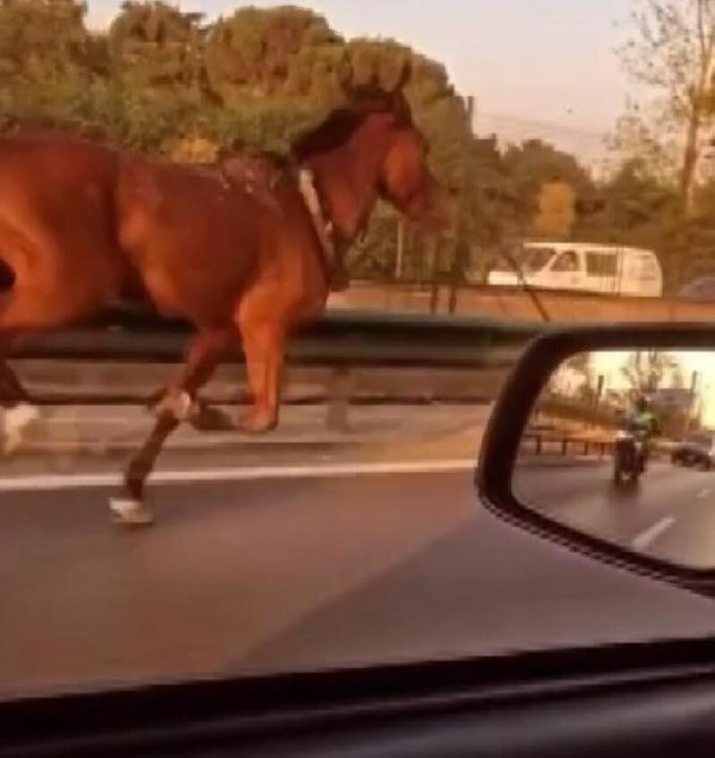Bursa'da başıboş at, caddede koştu