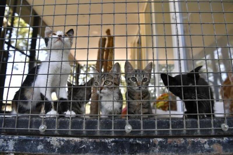 Yavru kediler yeni yuvalarını arıyor