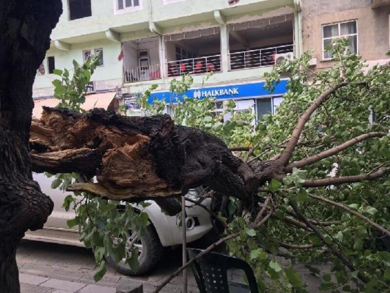 Yusufeli'nde rüzgar etkili oldu, ağaç dalları koptu