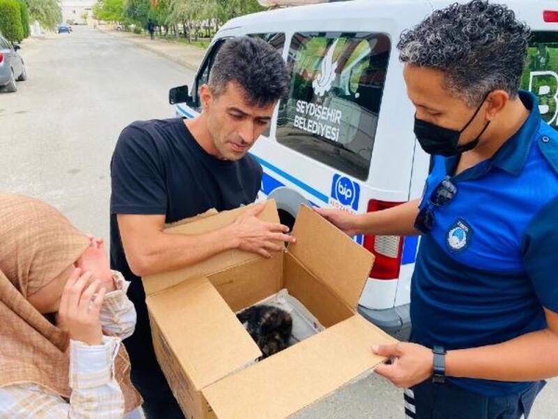 Yaralı kedi, barınağa teslim edildi