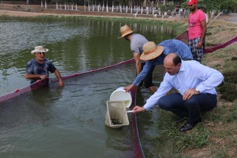 Adana'dan göl ve göletlere yavru balık takviyesi