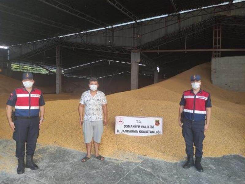 Osmaniye'de 52 ton mısır çalan hırsız yakalandı