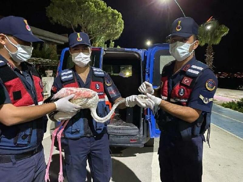 Jandarmanın bulduğu yaralı flamingoya tedavi
