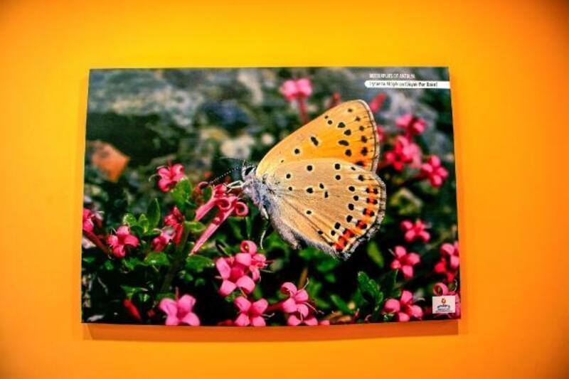 Antalya Kelebekleri, Antalya Havalimanı'nda