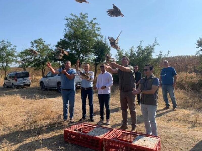 Enez'de doğaya 200 keklik salındı