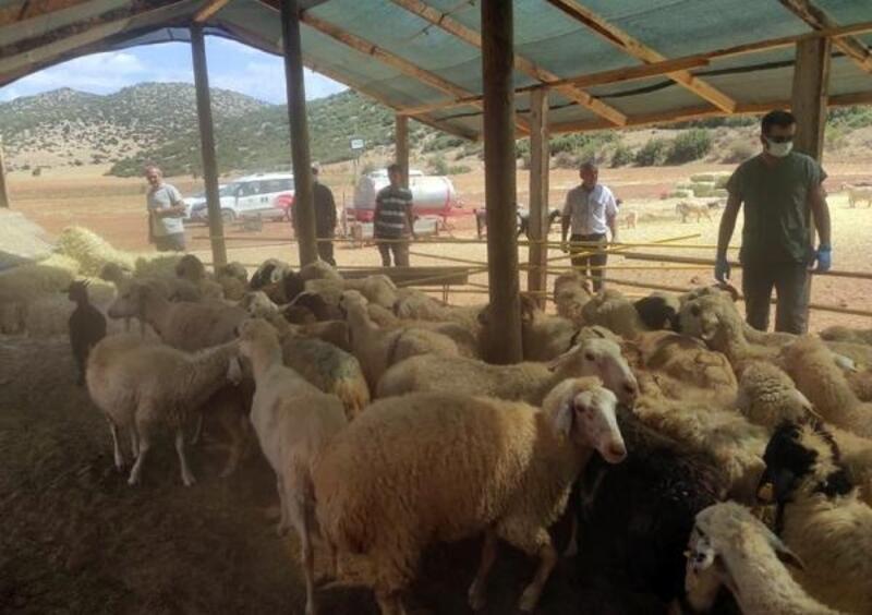 Korkuteli'den Manavgatlı yangınzedelere hayvan desteği