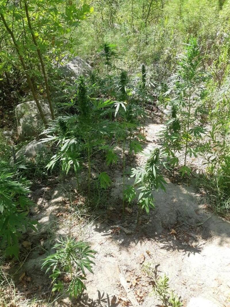 Jandarmadan ormana uyuşturucu baskını