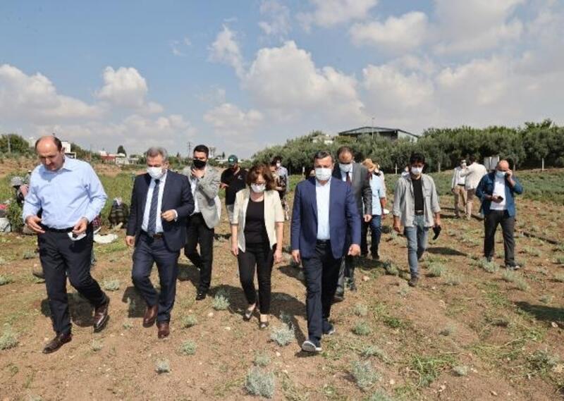 Lokman Hekim topraklarında şifa hasadı