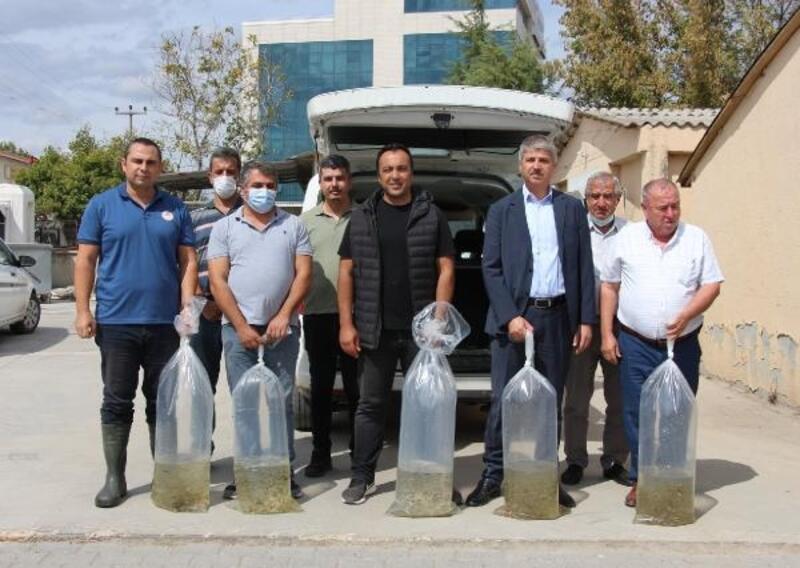 Edirne'de 1 milyon 600 bin sazan balığı göl ve göletlere bırakılıyor