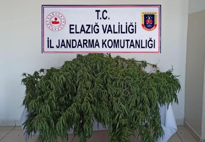 Elazığ'da uyuşturucu operasyonunda 1 tutuklama
