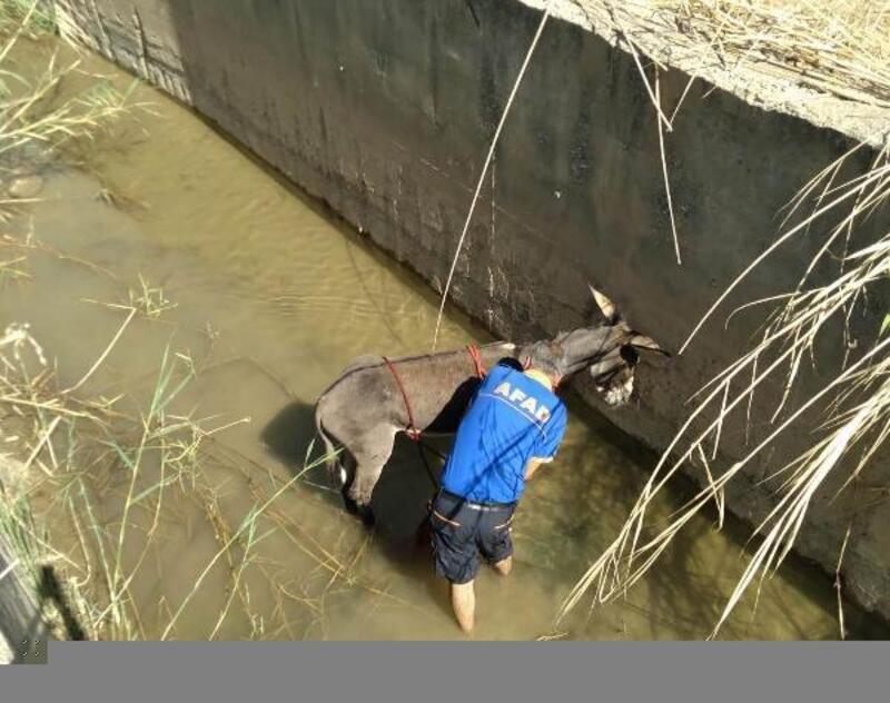 Sulama kanalına düşen eşek kurtarıldı