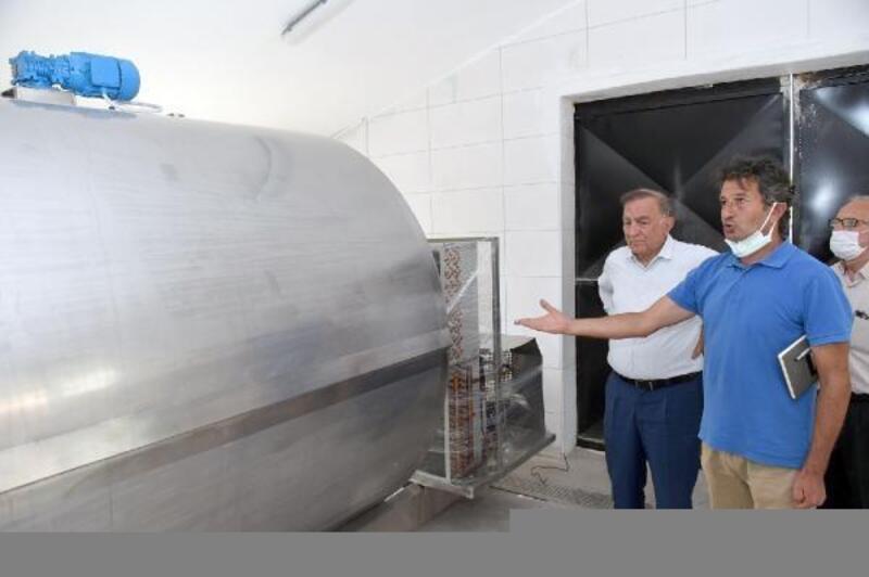 Seyhan'ın mandırası günde 5 ton sütü işleyecek