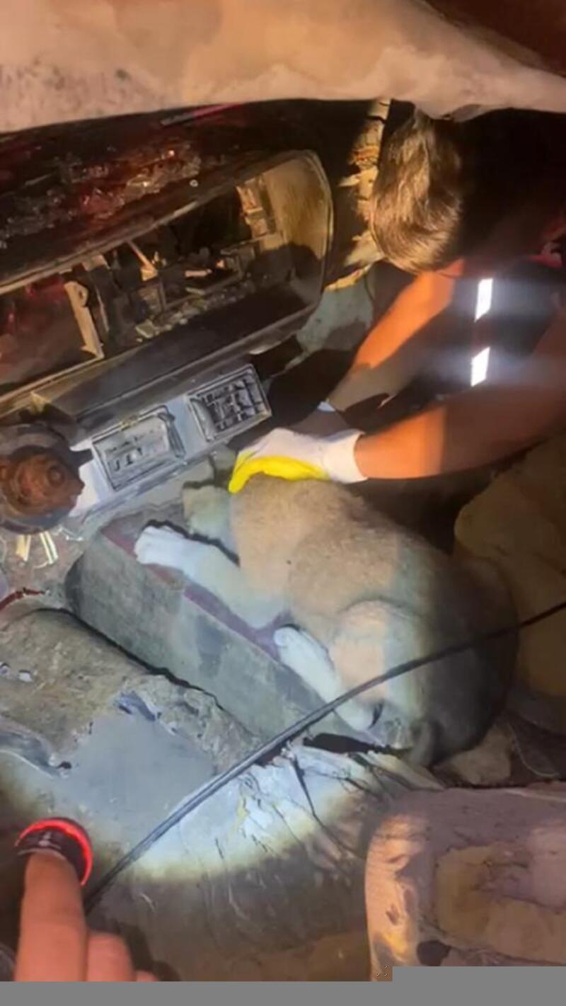 Hurda otomobilde sıkışan köpek kurtarıldı