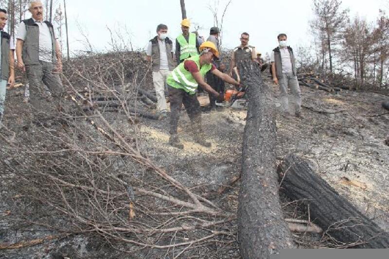 Karatepe'deki yanan ormanlar, yeniden yeşerecek
