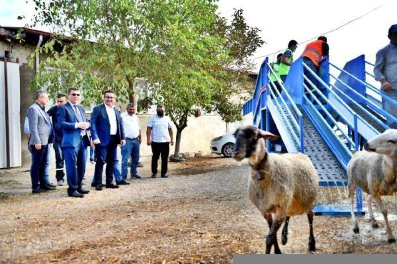 Mustafakemalpaşa Belediyesi'nden, koyun üreticisini sevindiren proje