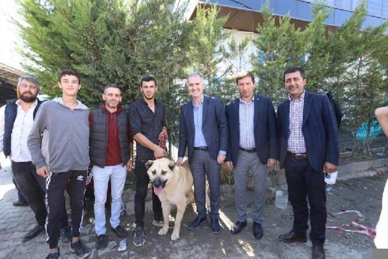 İnegöl'de çoban köpekleri yarıştı