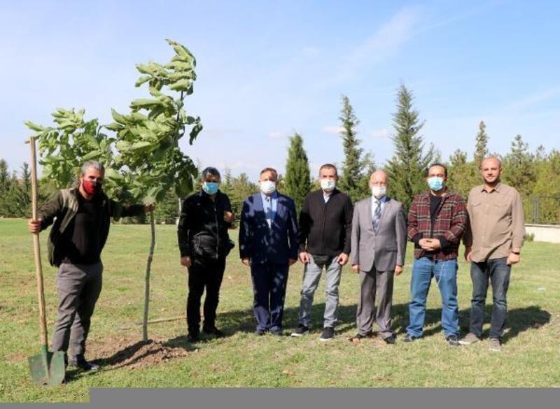 Trakya Üniversitesi Basın Fidanlığı'na DHA'nın fidanı dikildi