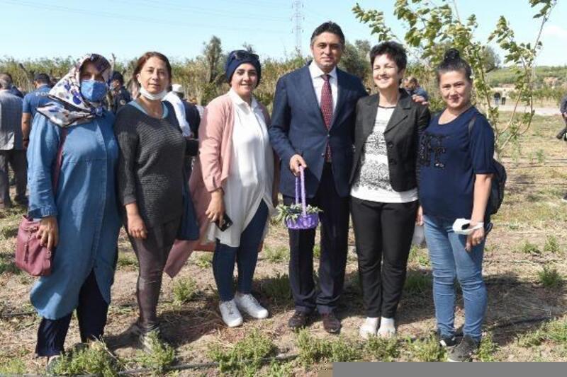 Aliağa'da Anadolu adaçayı ile İzmir kekiği hasadı yapıldı