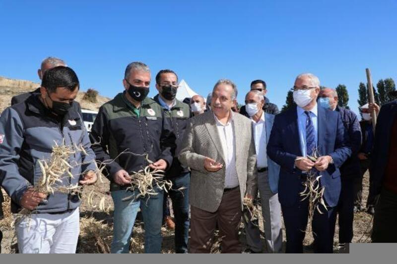 Başkan Yalçın, çiftçilerin fasulye hasadına katıldı