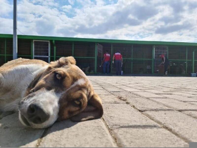 NAK üyeleri, Bademli Sevgi Hayvan Barınağı'nda tadilat yaptı