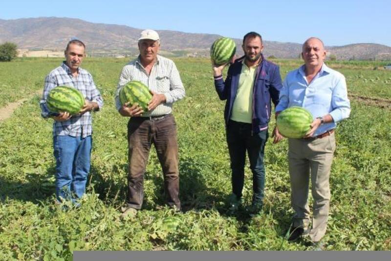 Manisa'dan Dubai ve Irak'a karpuz ihracatı