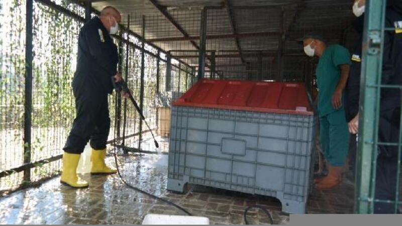 Beşiktaş Belediyesi'ne ait barınakta temizlik çalışması