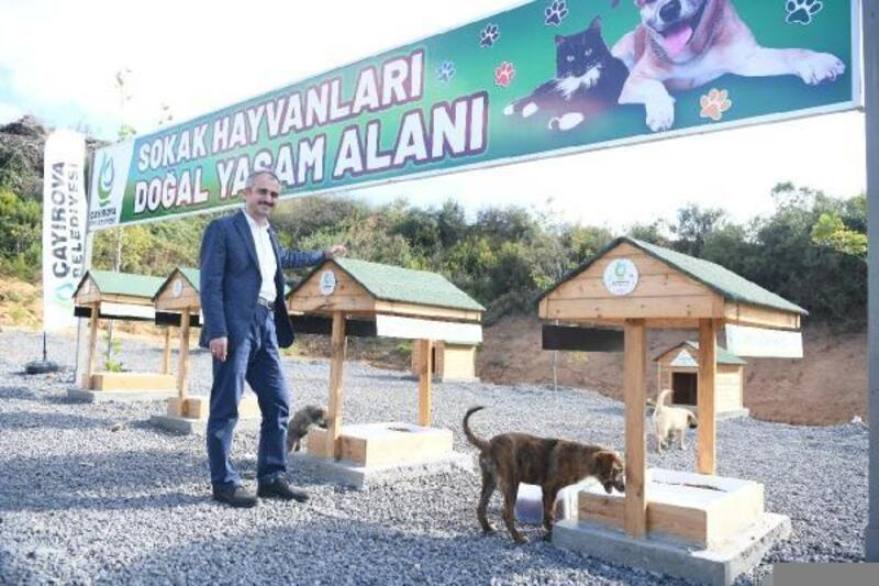 Çayırova'da sokak hayvanlarına doğal yaşam alanı