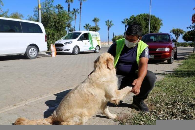 Erdemli'de sokak hayvanlarına özel ilgi