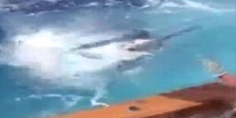 Kılıç balığının ölümcül atlayışı kamerada