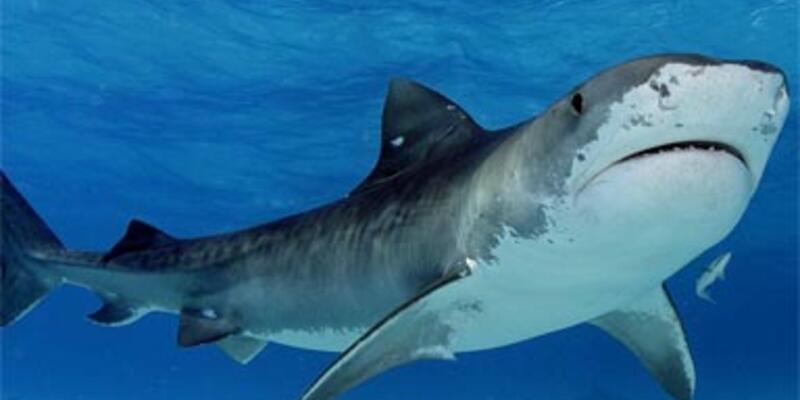 Köpekbalığı saldırısı: 1 ölü