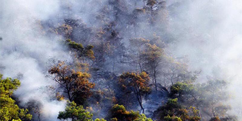 Türkiye 1 haftadır orman yangınlarıyla boğuşuyor
