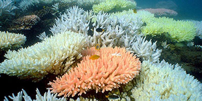 ABD, mercan resifine bıraktığı bombaları çıkarabilir
