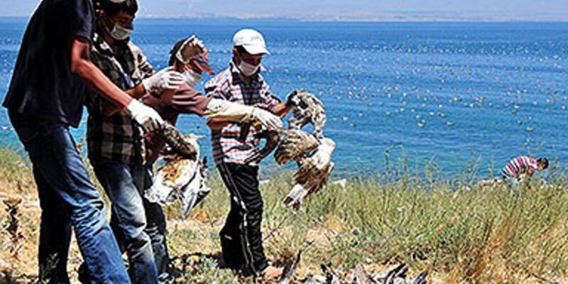 Adır Adası'nda yine martı ölümleri başladı