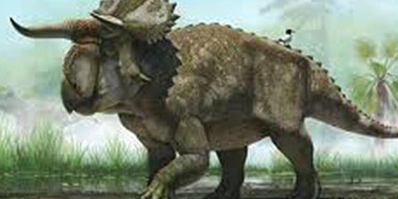 Yeni bir dinozor türüne ait kemikler bulundu