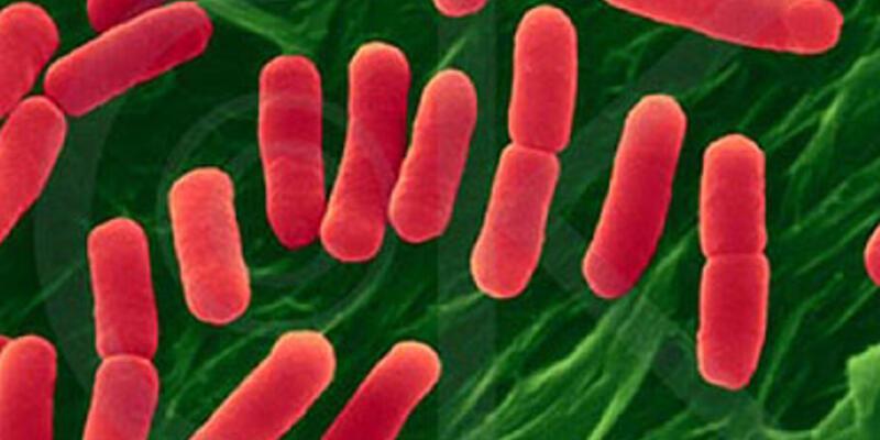 Mikropların genomları keşfedildi