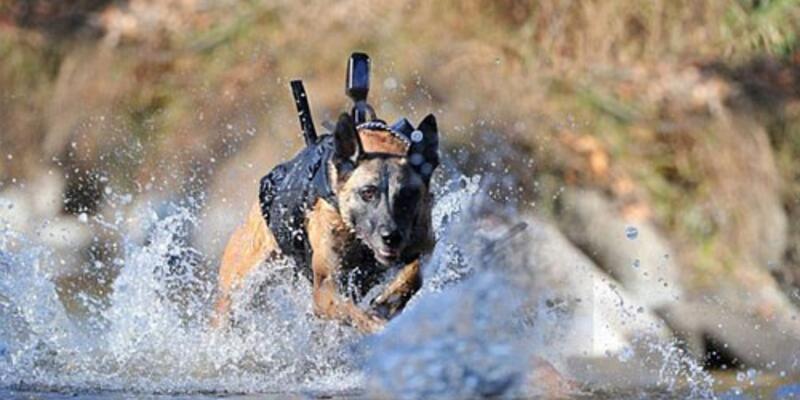 Köpeklere Google Glass geliyor