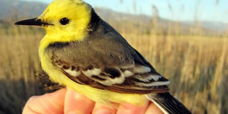Türk bilim adamları kuşların peşinde