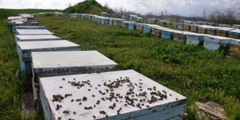 Binlerce arı telef oldu!