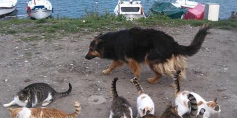 20 kediyle yaşayan köpek!
