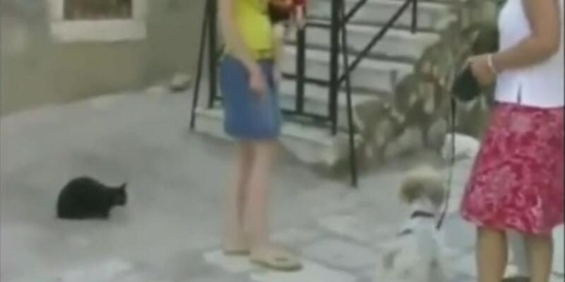 Köpeğe sinirlenen kedi, kaplan kesildi