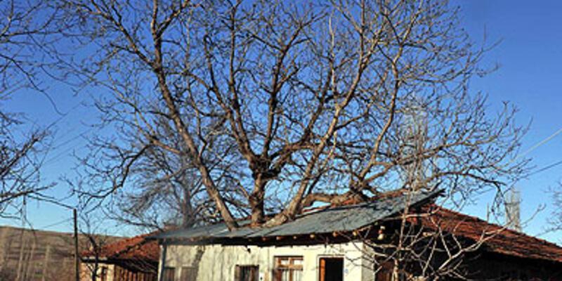 İçinden ağaç çıkan ev görenleri şaşırtıyor