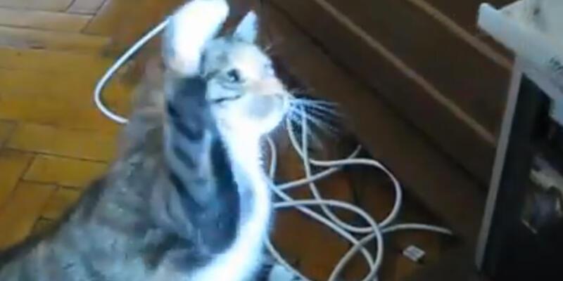 Kedilerle DVD sürücülerin husumeti!