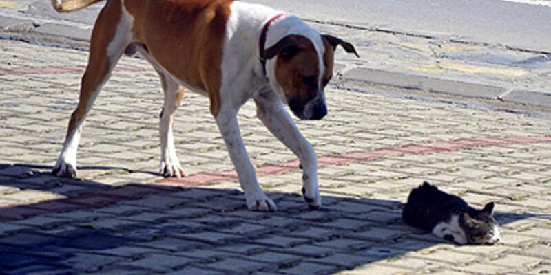 Yaralı kediyi köpek kurtardı