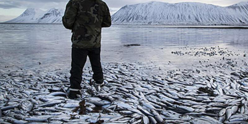 İzlanda'da 10 bin ton balık kıyıya vurdu!
