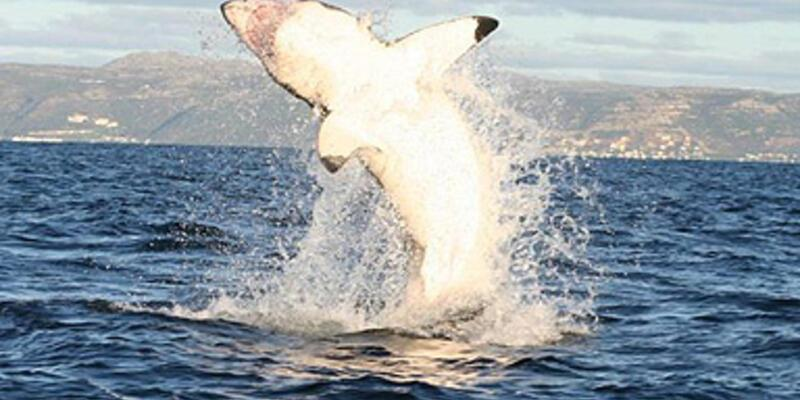 Gökyüzünden köpekbalığı düştü!