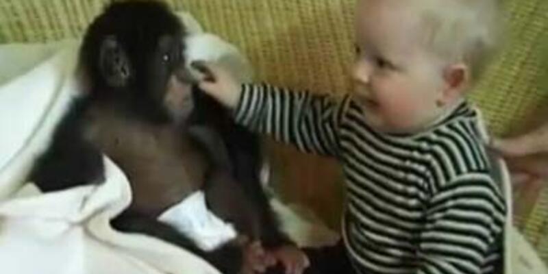 Bebeğin yavru şempanzeyle komik oyunu